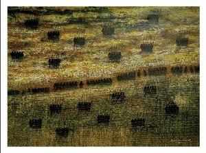 KABAR TANAH SURGA / 200 x 150 cm / acyrilic on canvas / 2013